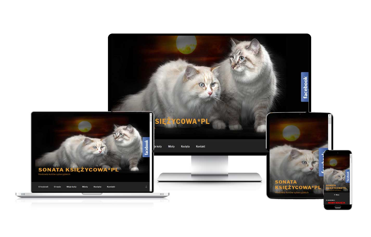 Tworzenie stron internetowych. Strona dla hodowli kotów