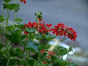 zdjęcia makro kwiaty, grafika komputerowa, web design Beata Kujawa